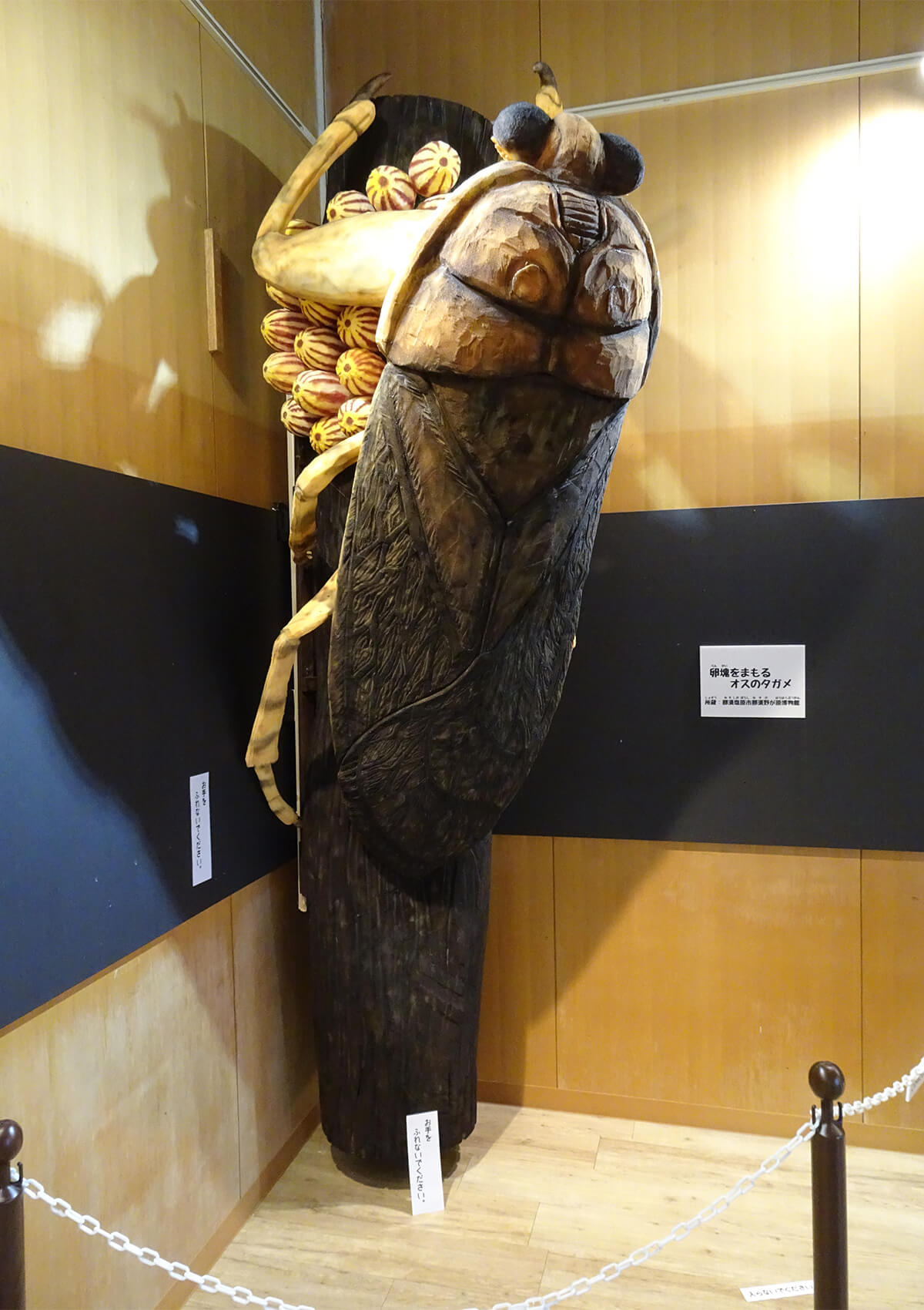 タガメの画像 p1_31