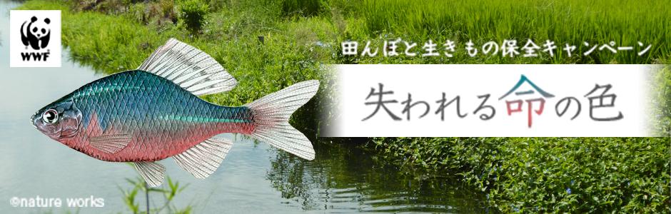 田んぼと生きもの保全キャンペーン