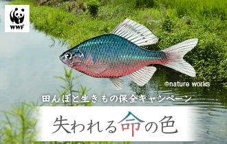 WWF 田んぼと生きもの保全キャンペーン
